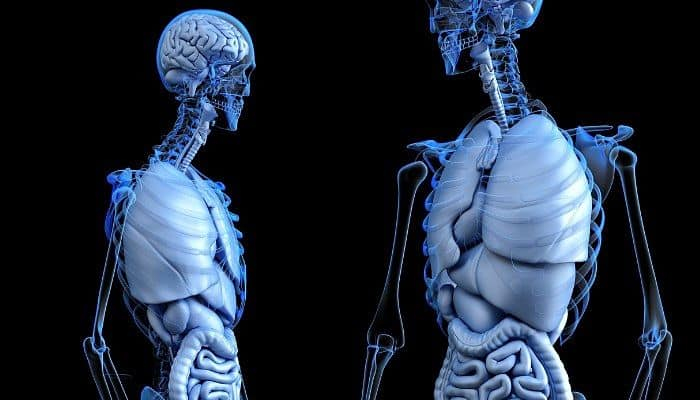Qué es La Anatomía | Historia | Ramas | Clasificación | Importancia ...