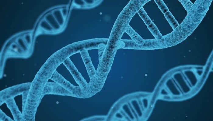 Estudio de los genes
