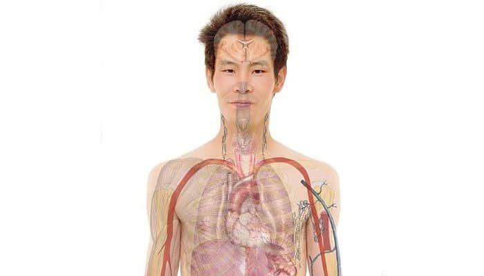 Areas de estudio de la fisiología
