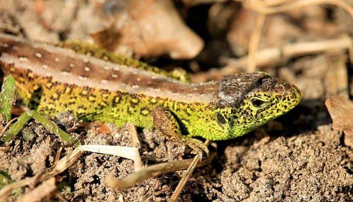zoologia-reptiles