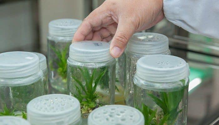 alicaciones de la biotecnologia