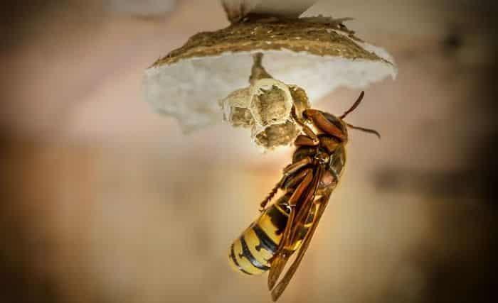 Ciencia de los insectos