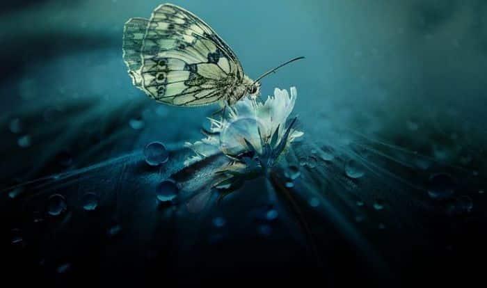 Ramas de la entomologia