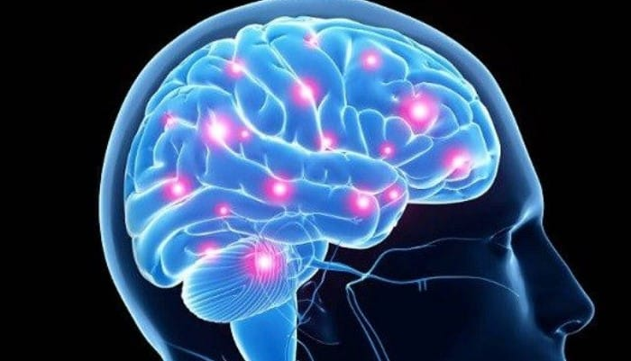 Estudio del sistema nervioso central