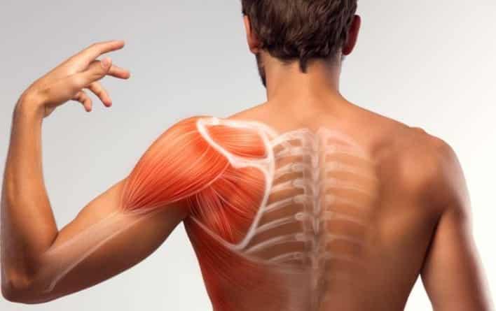 Estudio de los músculos