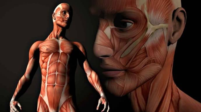 Miologia humana