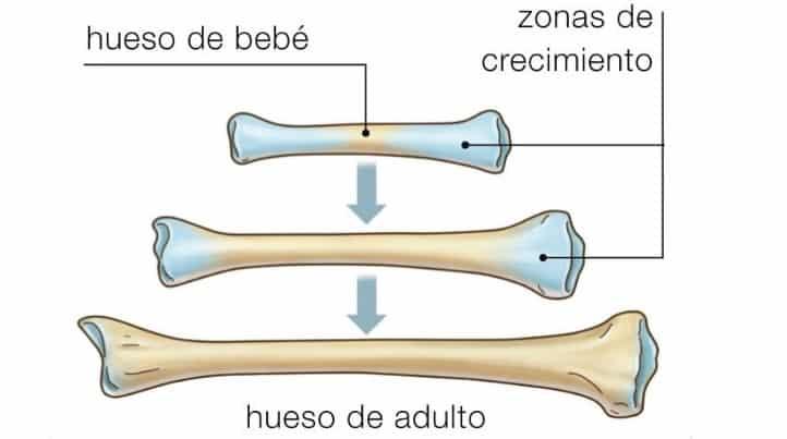 desarrollo del sistema esqueletico
