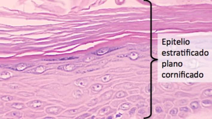 que es la anatomia microscopica