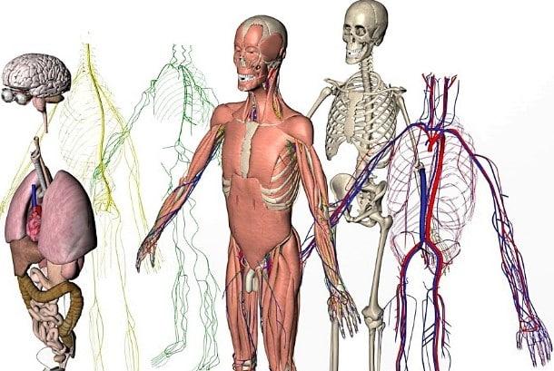 anatomia de los sistemas