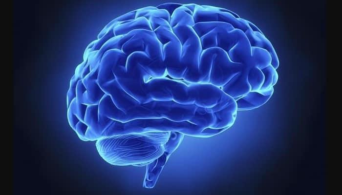 anatomia del encefalo