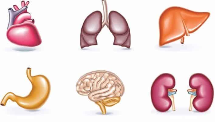 Anatomia macroscopica