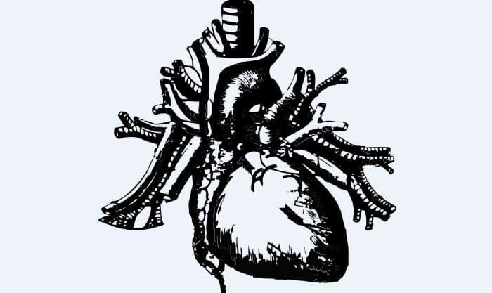 Irrigacion del corazon