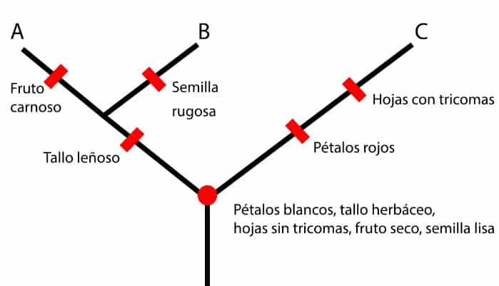 taxonomía y la filogenia