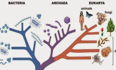 arbol filogenetico