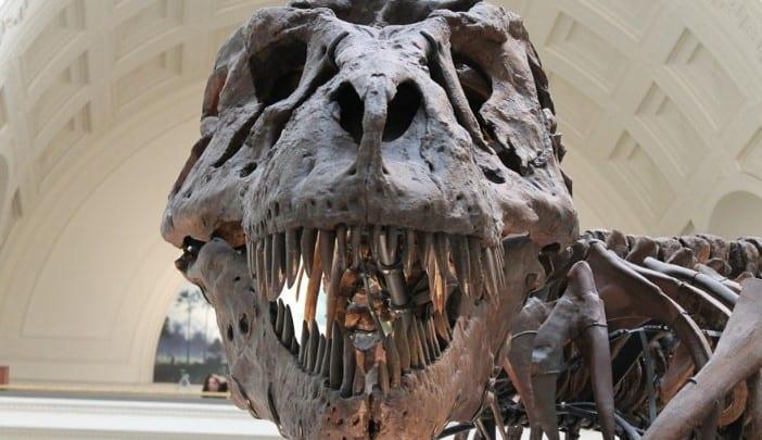 ciencia paleontóloga