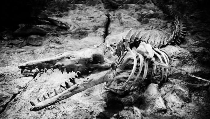 principios de la paleontologia